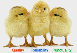 Quality | On-Time | Reliability
